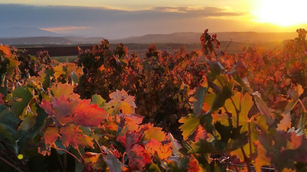 Viñedos de La Rioja en Otoño