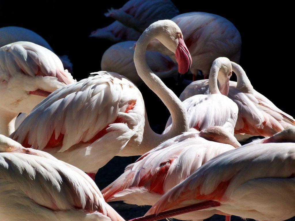Flamencos en el zoológico de Valencia